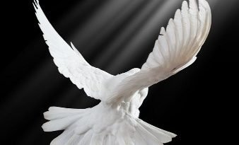 Dove in light picturing the Holy Spirit